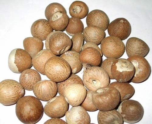 Nut Group 93