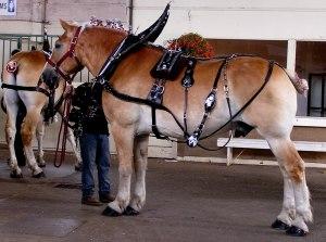 horses, draft horses, PNE, fairs