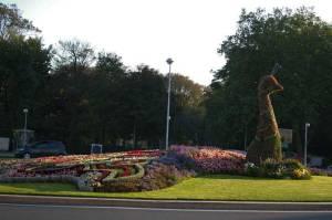 Calais, gardens, travel, peacock, France, Europe
