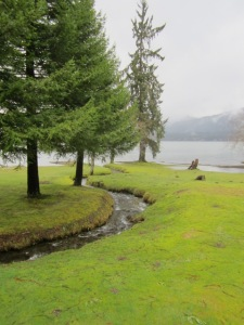 rainforest, Lake Quinault, writers retreat,